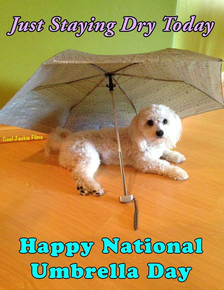 National Umbrella Day Wishes pics free download