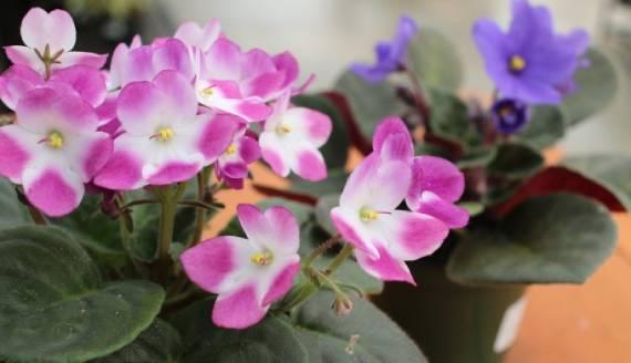 जुकाम से राहत के साथ ही याददाश्त भी बढ़ाते हैं ये जादुई पौधे, जानिए फायदे