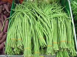 budidaya tanaman kacang panjang