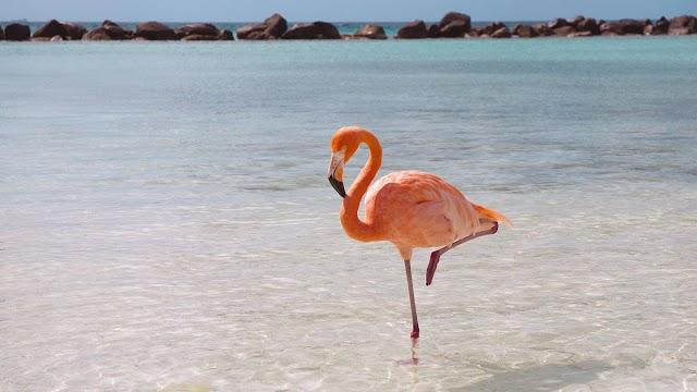 493: Allı Turna Dedikleri Flamingo İmiş