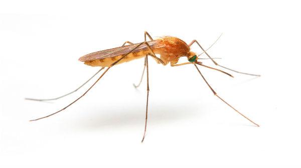 Aumento do número de casos de malária na região preocupa o setor de endemias em Itaituba.