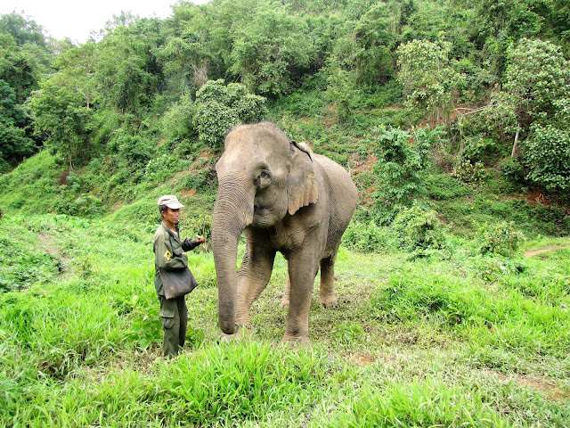 mahout elephant conservation center sayaboury laos