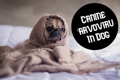 Canine Parvovirus In Dog | Parvovirus Treatment