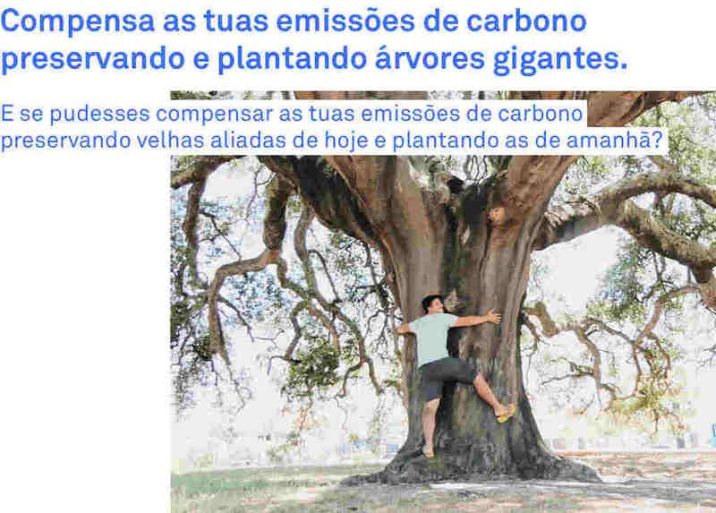 Apresentamos-te o Carbono Biodiverso, que te ajudará a tomar ação para diminuir o teu impacto ambiental. Desenhámos 5 planos que te permitirão compensar as tuas emissões de carbono pessoais, enquanto proteges uma das tecnologias de base natural mais eficazes do mundo: as Gigantes Verdes, árvores anciãs que prestam serviços de ecossistema essenciais à vida, entre os quais a sequestração de carbono.