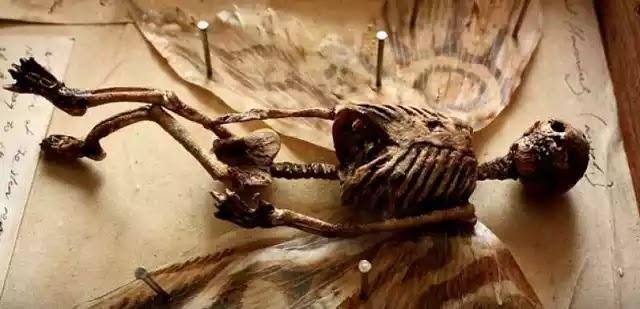 Παράξενα πλάσματα βρέθηκαν σε υπόγειο εγκαταλελειμμένου σπιτιού στο Λονδίνο.. (Βίντεο)
