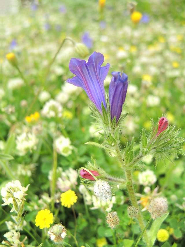 Kreta : fleurig en groen