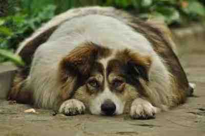 Tips on Assisting Your Obese Dog Reduce Weight