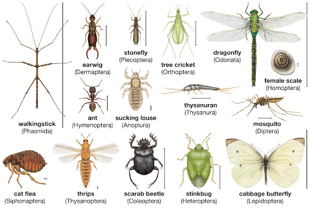Common Forest Insects