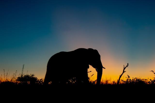 أصحاب الفيل