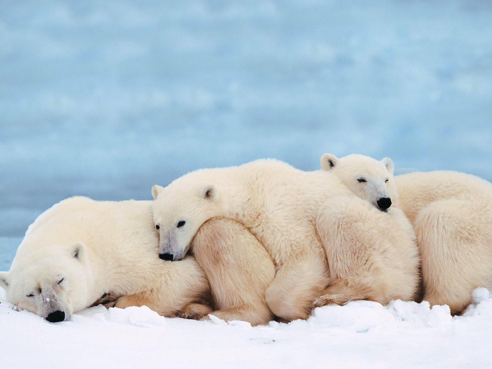 Otter Cute Wallpaper Polar Bear Fun Animals Wiki Videos Pictures Stories