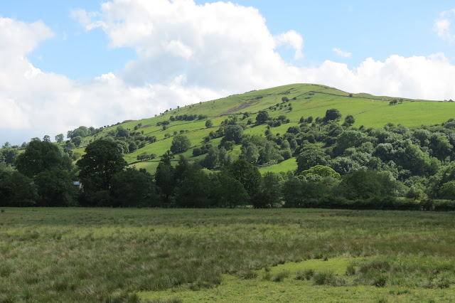 Across a meadow, a green hill with trees.
