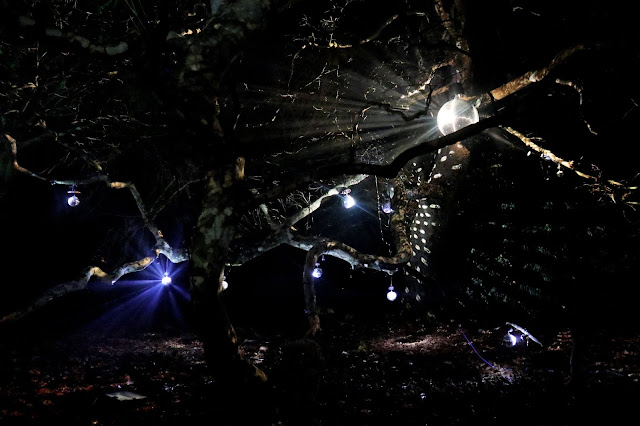 A clearing in the forest, lit up by a disco ball, reflecting shapes on the trees