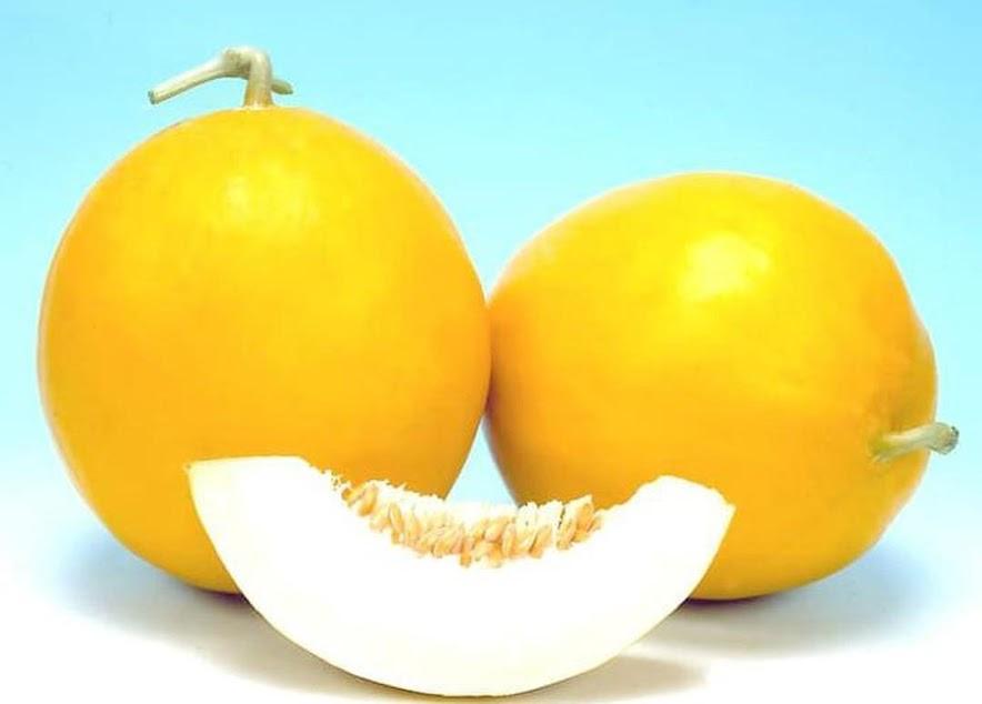 Produk Terbaru Bibit Benih Seed Buah Melon Golden Manis Sweety Fruit Honeydew Jawa Timur