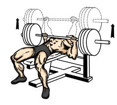 Latihan Fitness Untuk Dada ~ Bench press