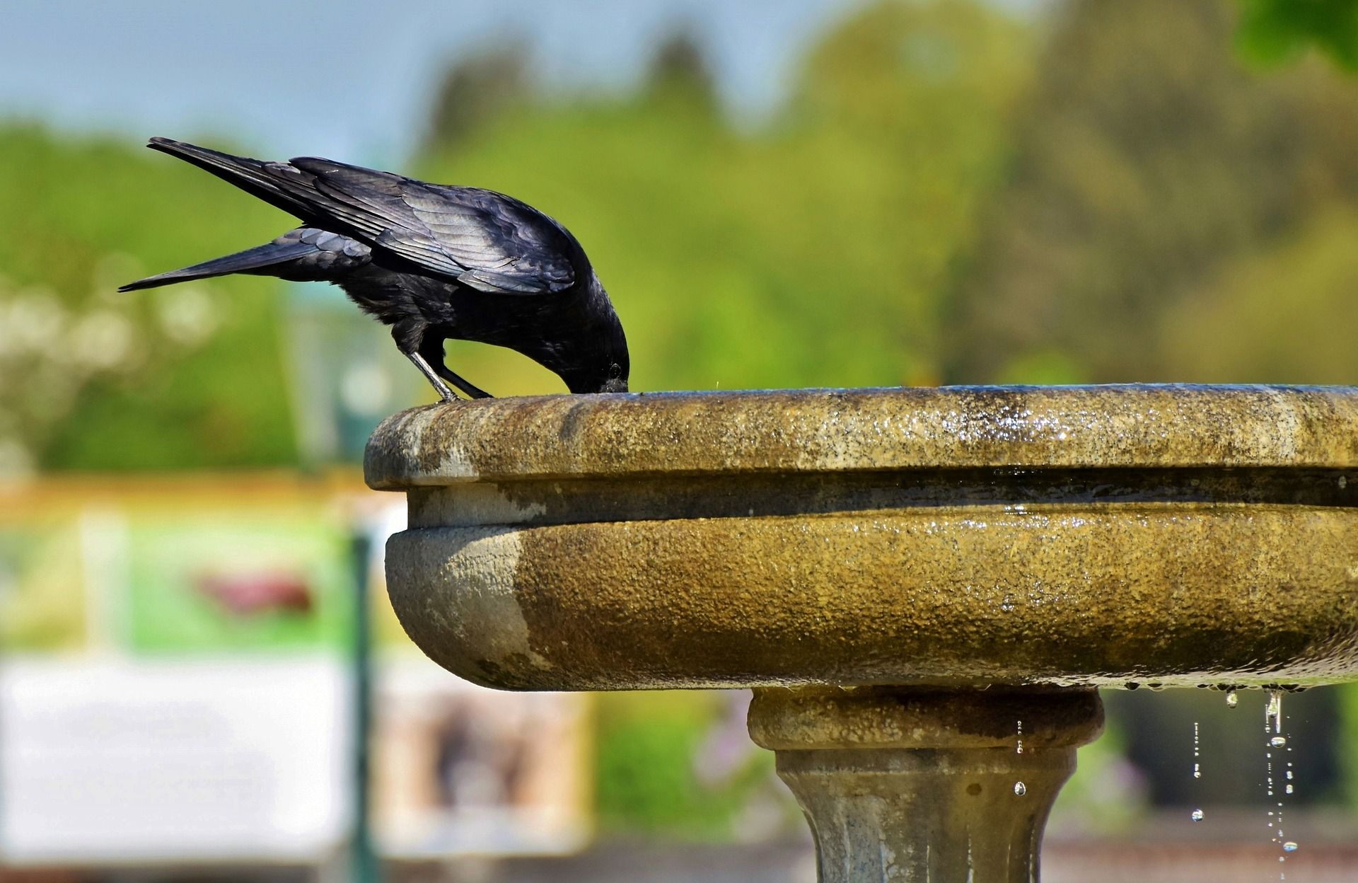 Why do we feed crows before a meal?