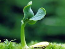 Ciri-ciri Lingkungan Tidak Sehat