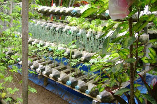 Cara dan Dosis Penggunakan Produk Organik NASA pada Tanaman Hidroponik - www.agrotaninusantara.com