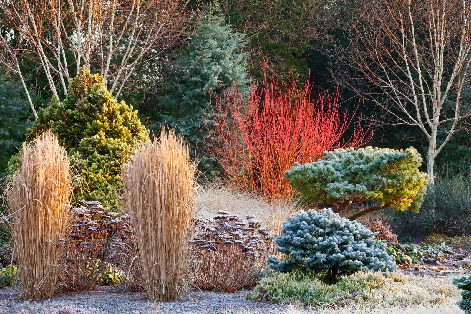 bcfe8ad6ab519 Buszując w ogrodzie  Piękny ogród zimą  Tak