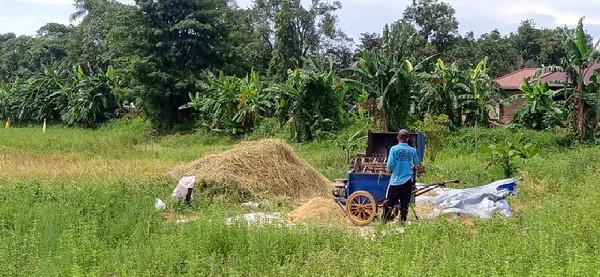 Petani Kabupaten Banjar alami kerugian