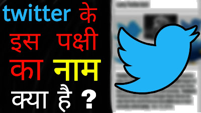 Twitter के इस पक्षी का नाम क्या है ? What is the name of twitter bird / Mind blowing facts in Hindi