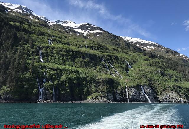 Kittiwake Rookery Falls Whittier Alaska