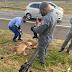 Onça morre após ser atropelada por caminhão na Zeferino Vaz