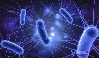 Contoh Simbiosis Mutualisme Manusia Dengan Bakteri E-Coli