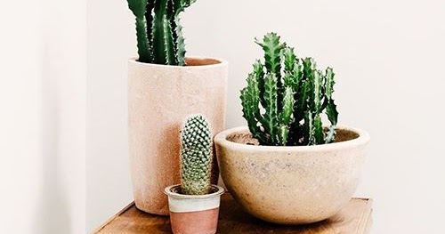 Ultimissime dall 39 orto arredare casa con le piante for Arredare casa con le piante