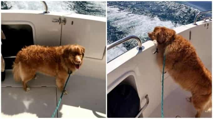 Family Out Boating Spots Dog Treading Water In Lake Michigan, 4 miles offshore