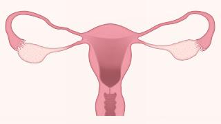What is uterus fallopian tube