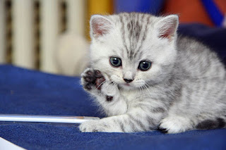 صور حيوانات كيوت لطيفة، افضل صورخلفيات