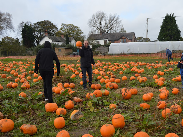 Pumpkin Picking At Kenyon Hall Farm
