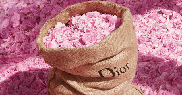 rose-dior