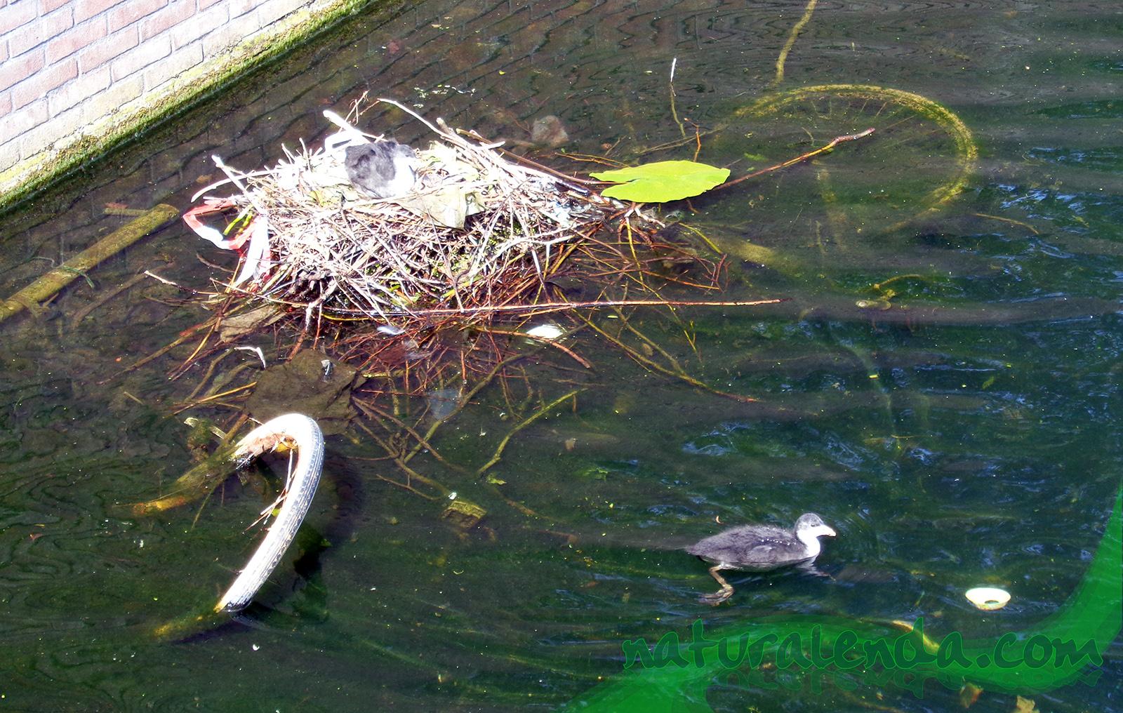 el pato raro