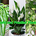 Best Indoor Plants You Will Love At Home
