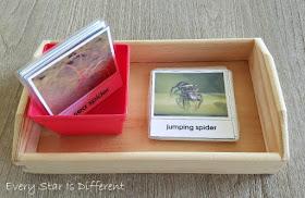 Spider versus Sea Spider Sort