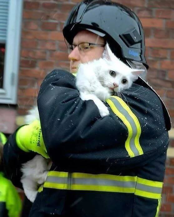 Fireman Rescues Petrified Catto From A Burning Building In Viral Photo