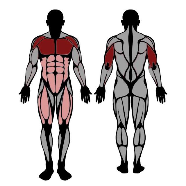 العضلات المستهدفة في تمارين الضغط