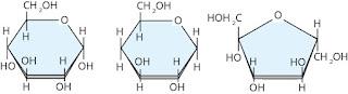 bentuk siklis dari glukosa, galaktosa dan fruktosa