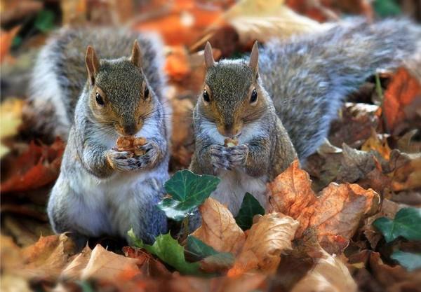 Fond d 39 cran automne animaux fonds d 39 cran hd for Fond ecran hiver animaux