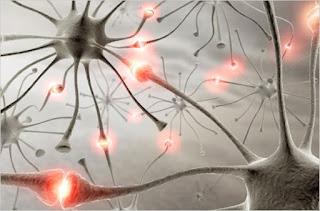 Πώς να αναπτύξετε τον εγκέφαλο σας - Πλαστικότητα εγκεφάλου