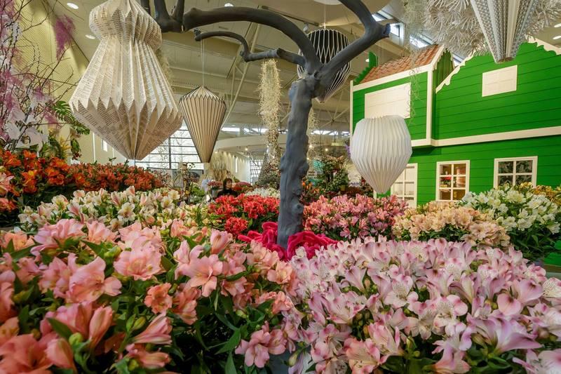 Alstroemerias en Oranje Nassau Pavilion, Keukenhof