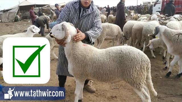 اضحية عيد الاضحى خروف العيد