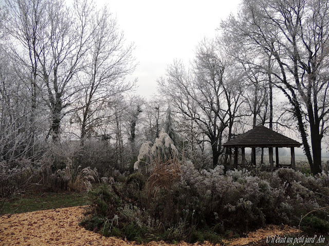 jardin d'hiver gelées matinales