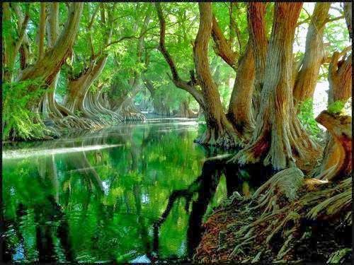 rawa,hijau,indah,alam