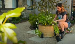 Katie Rushworths shady planter