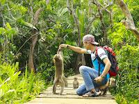 Berkunjung ke Pulau Kembang - Kalimantan Selatan