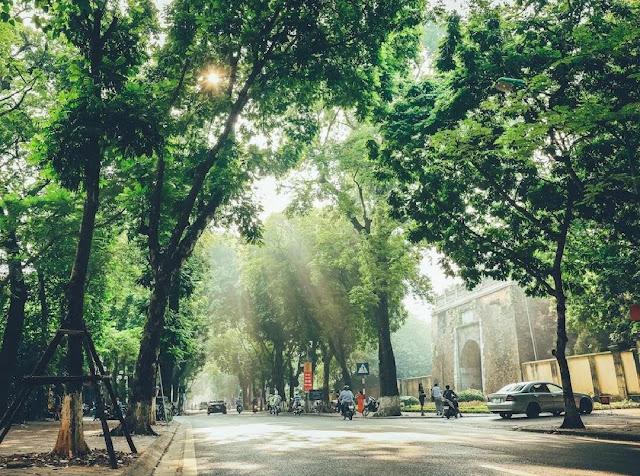 Biệt thự Sunshine Crystal River: Cảm hứng từ con đường Phan Đình Phùng rợp lá
