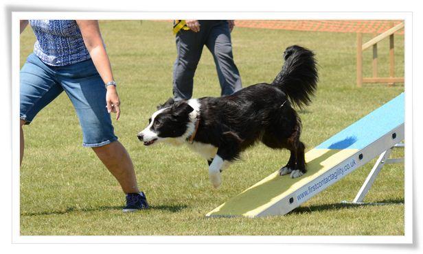 Dog Agility Training Equipment