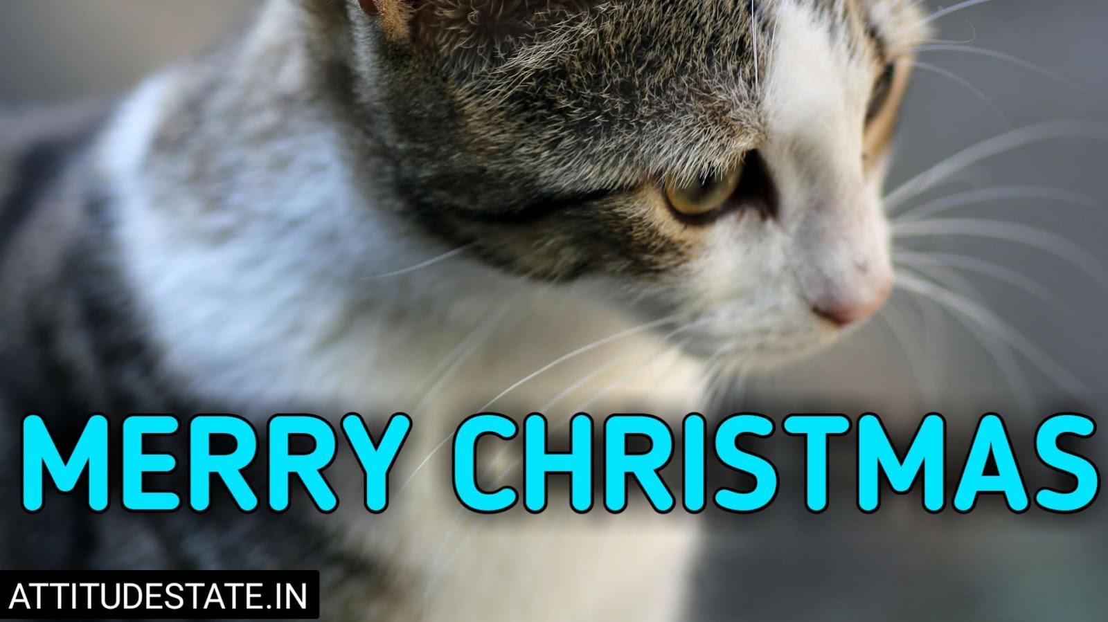 funny merry christmas pics